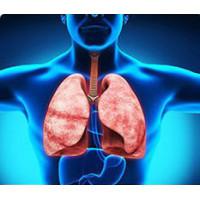 Дыхательной и иммуной систем