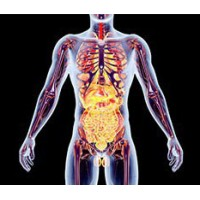 Эндокринной и мочеполовой систем